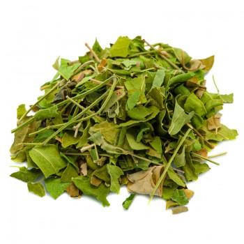 Moringa Oleifera foglie...