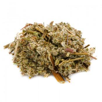 Artemisia vulgar herbal tea...